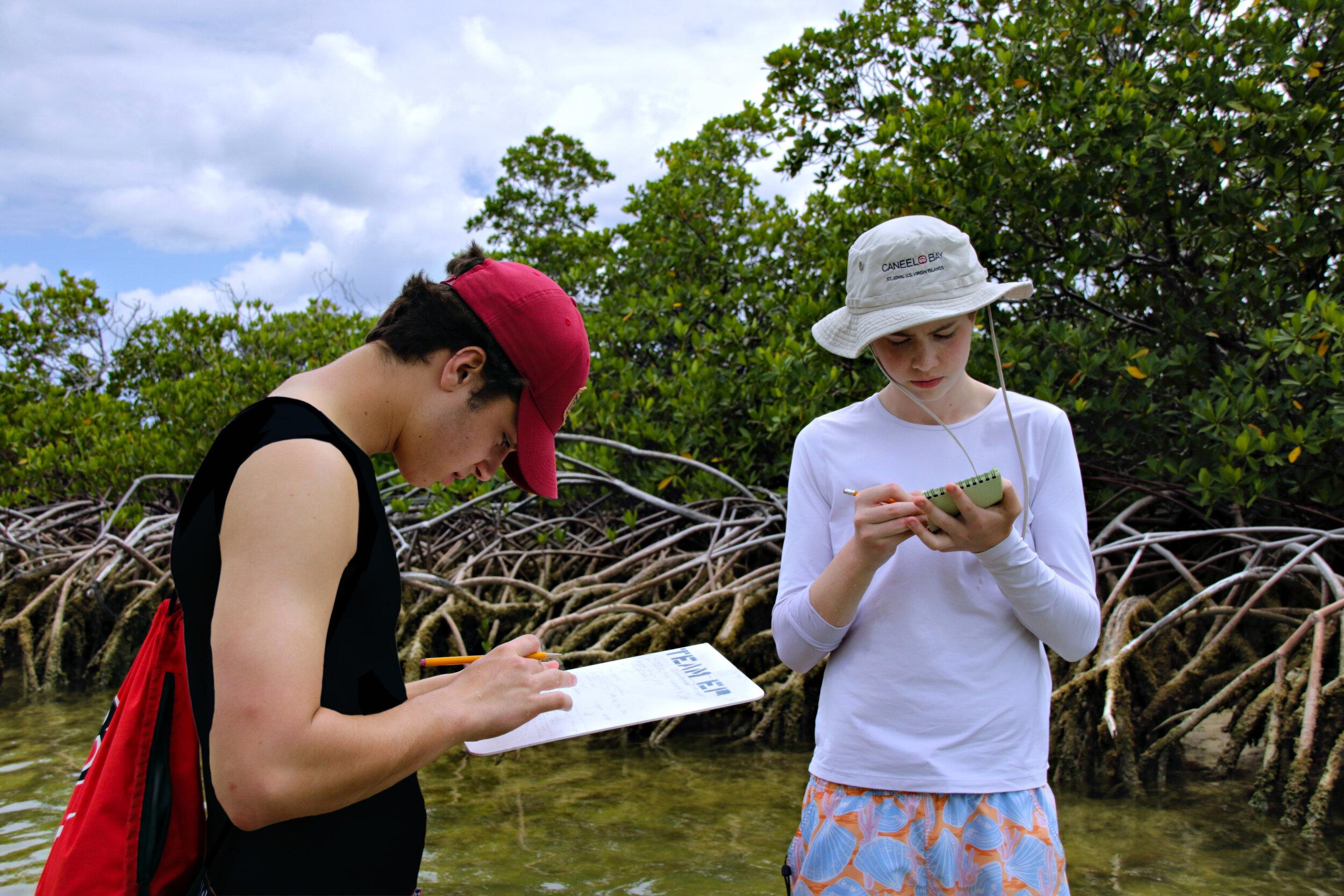 island school - fischetti 2.jpg