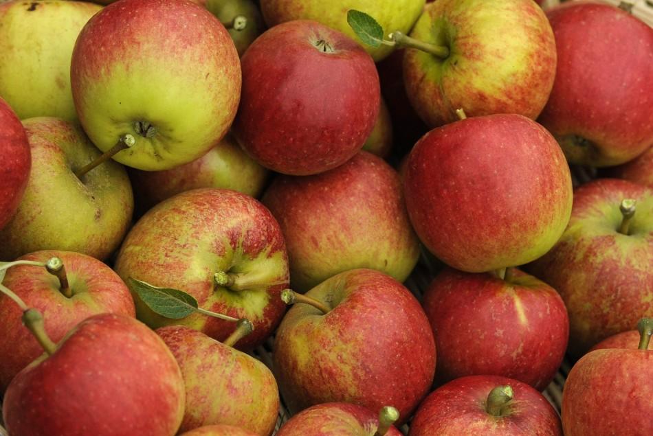5119-apple-tree.jpg
