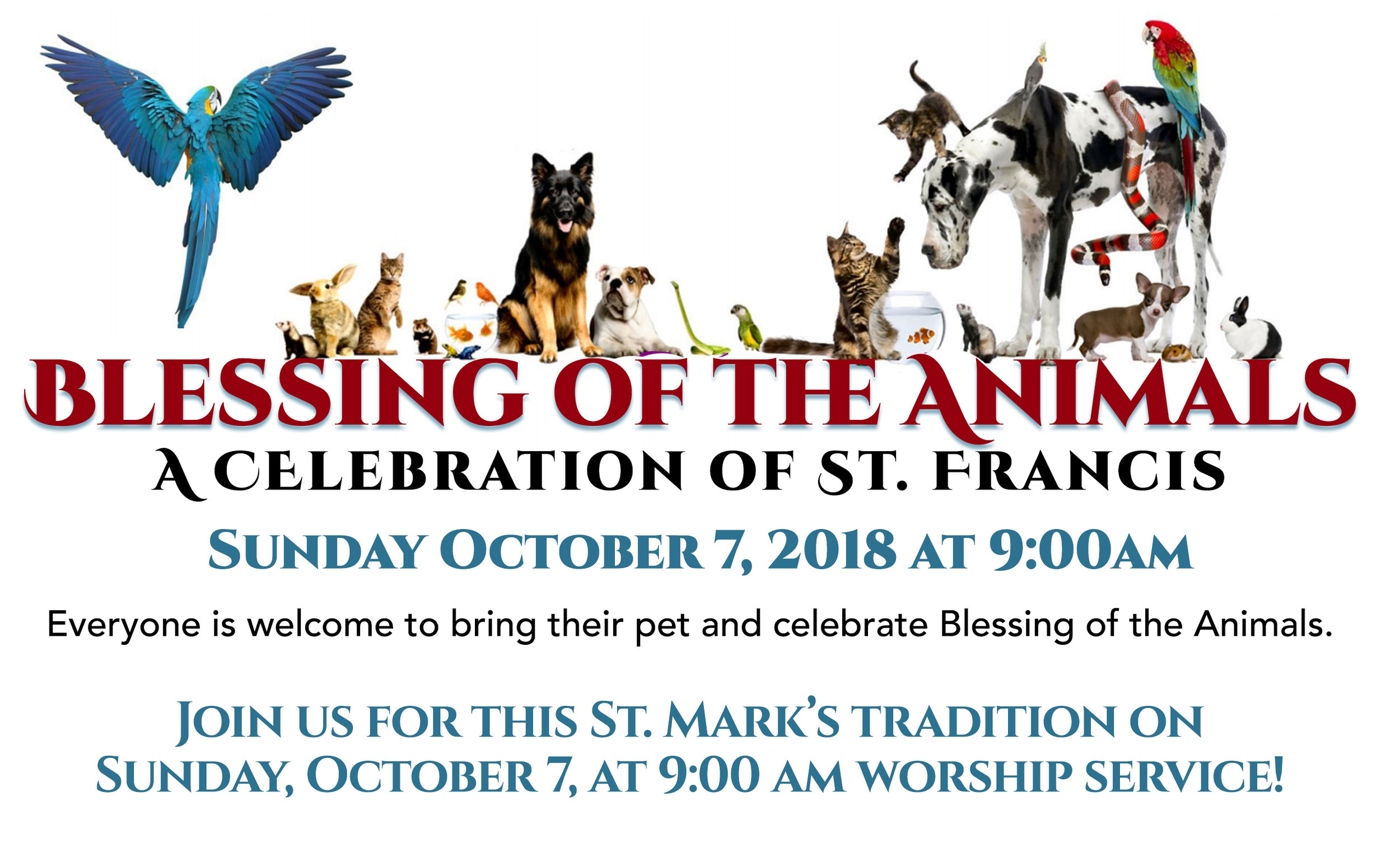 Blessing of the Animals 2018 for Web.jpg