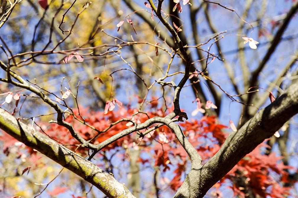 Maple tree_yard adds.jpg