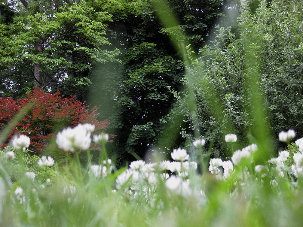 Spring_Cloverpsd.jpg