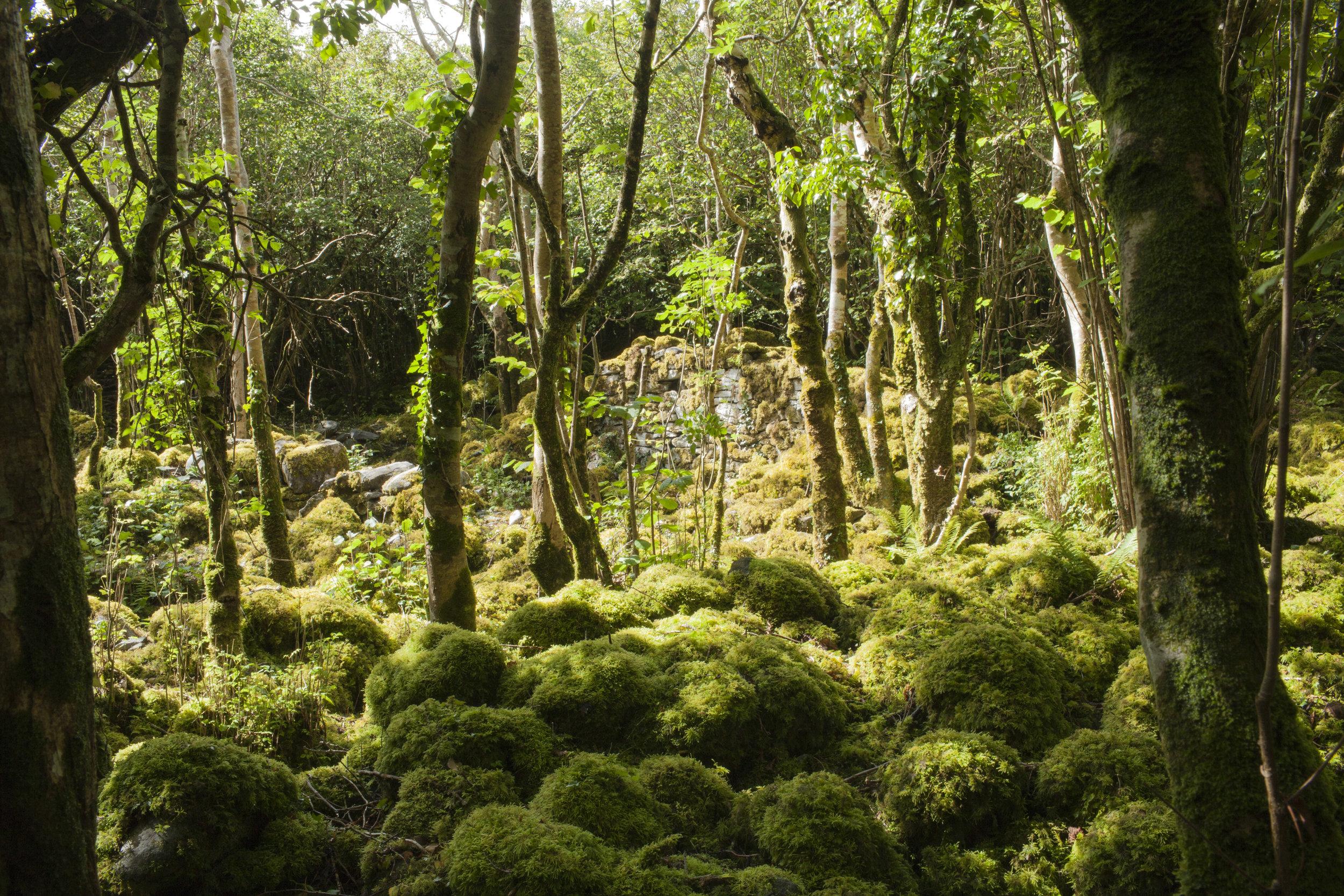 Mossy stones.jpg