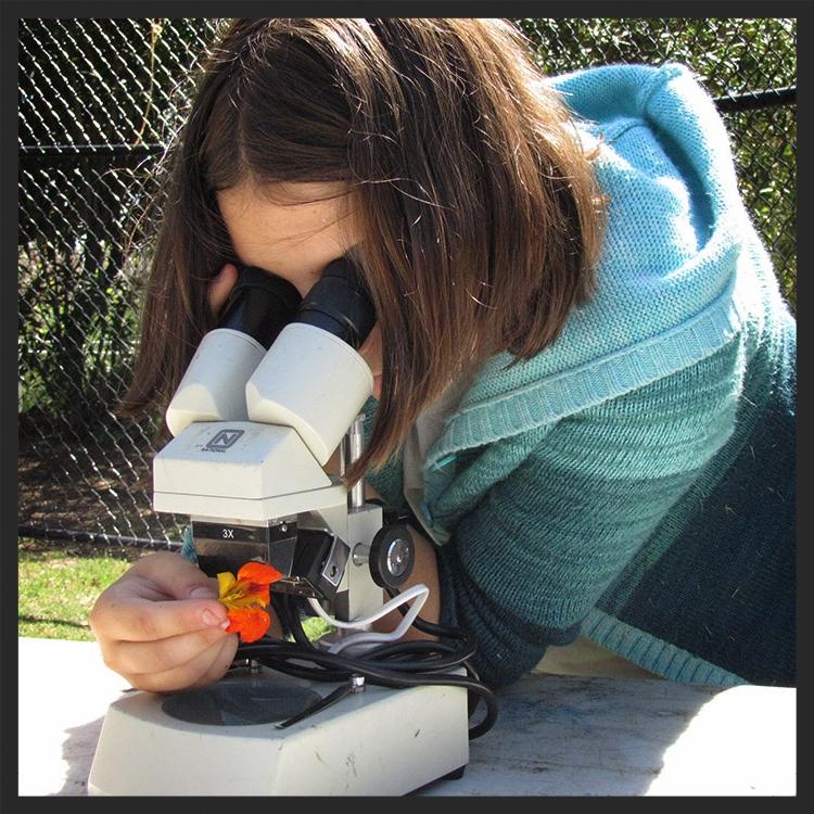 Botany & Microscopes