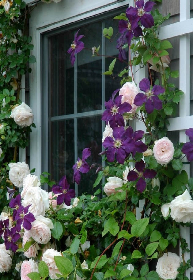 Great Garden Combos Roses Clematis For Small Space Gardens