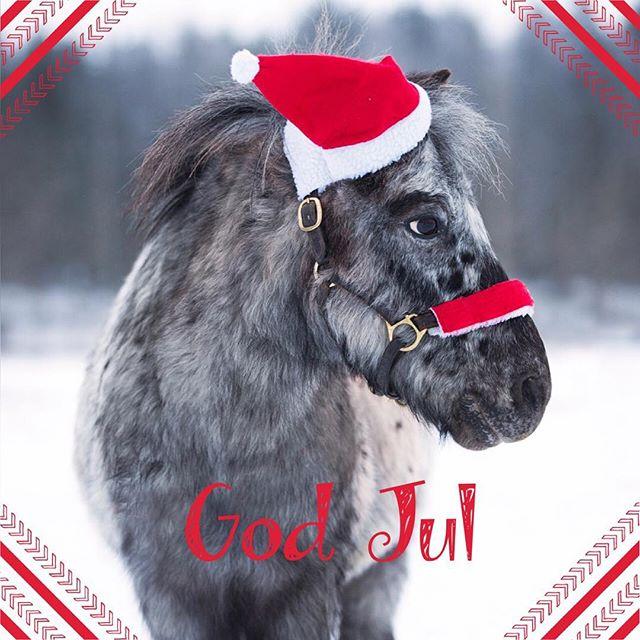 Vi på Stall Långvik önskar er alla ❤ en God Jul och ett gott nytt år #julistallet #ridskola #godjul🎄 #🐎pixel