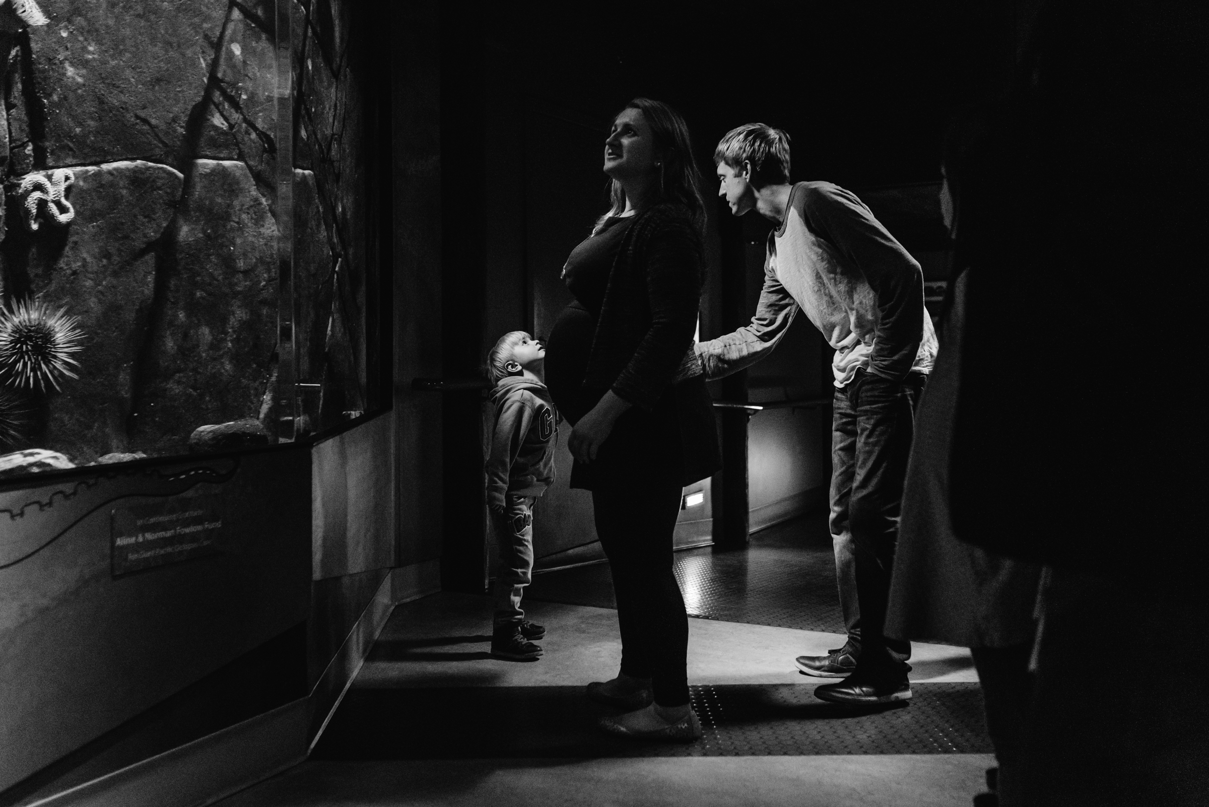 Nicola_Reiersen_Photography_Victoria_BC_Aquarium_Maternity_Session (52).jpg