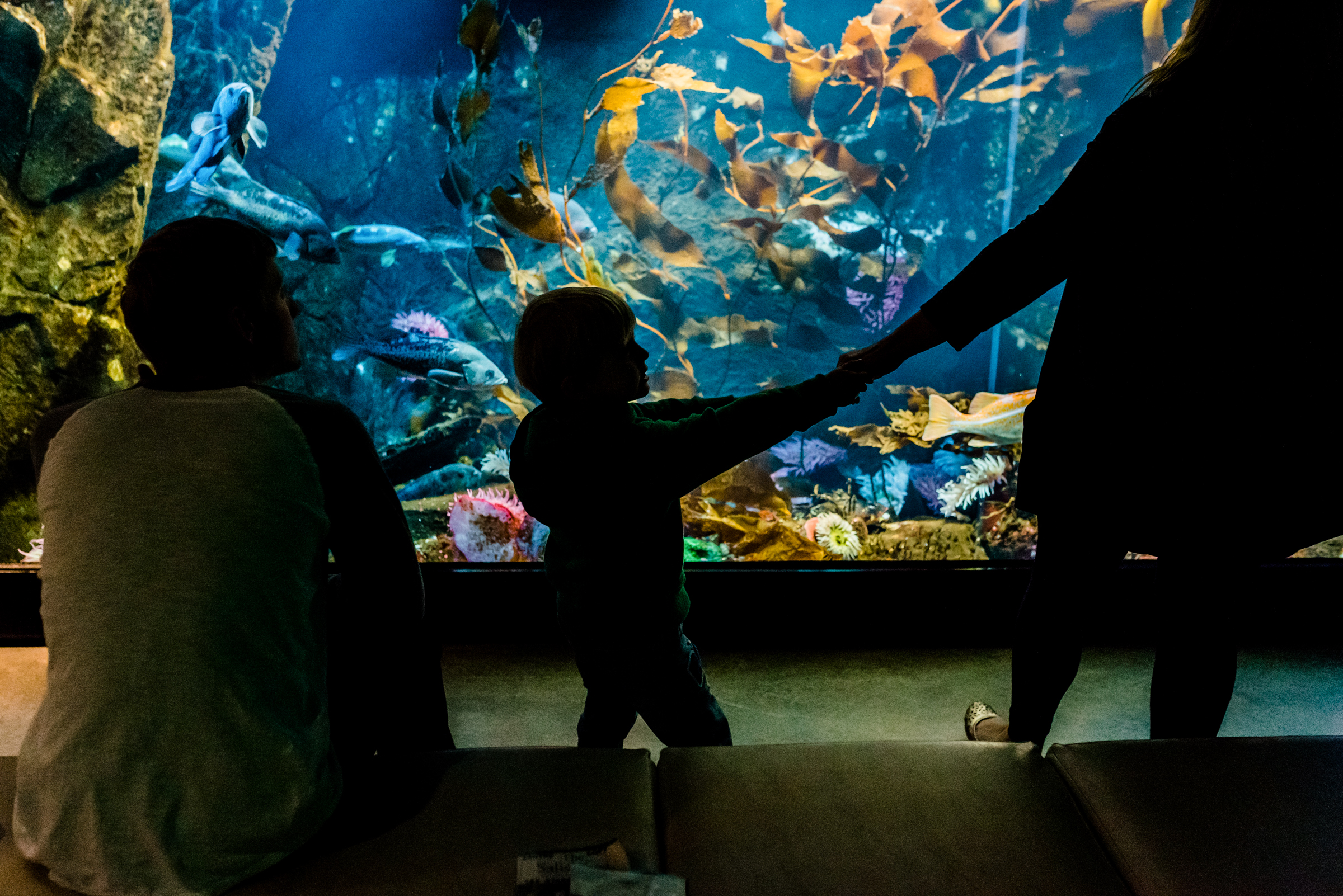 Nicola_Reiersen_Photography_Victoria_BC_Aquarium_Maternity_Session (100).jpg