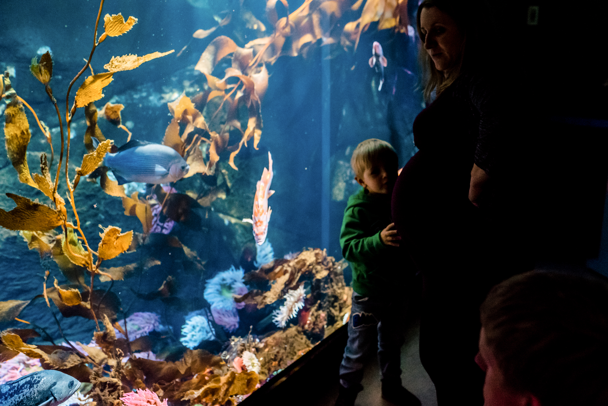 Nicola_Reiersen_Photography_Victoria_BC_Aquarium_Maternity_Session (113).jpg