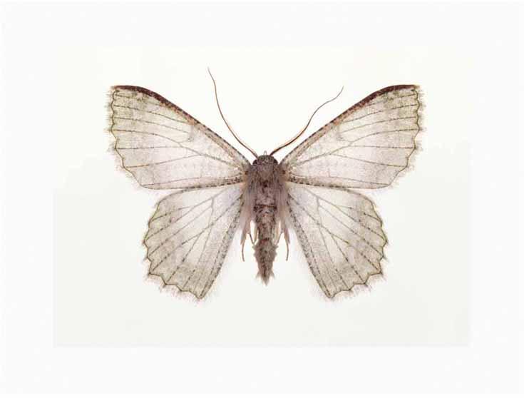 moth3-2working.jpg