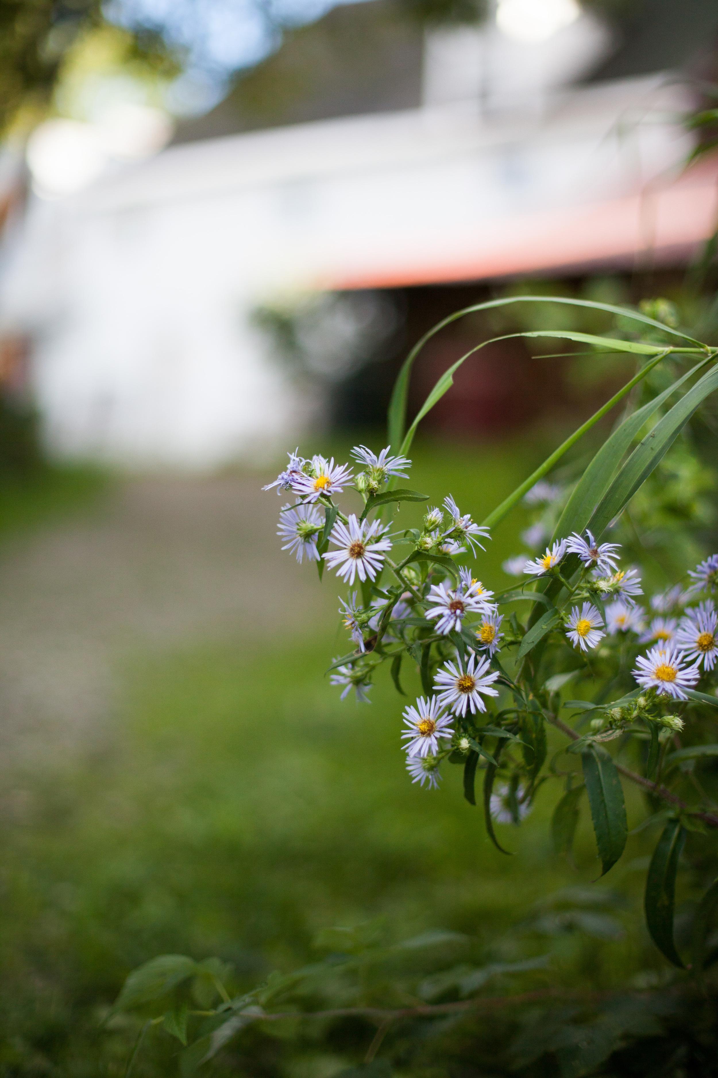 Flora abounds...