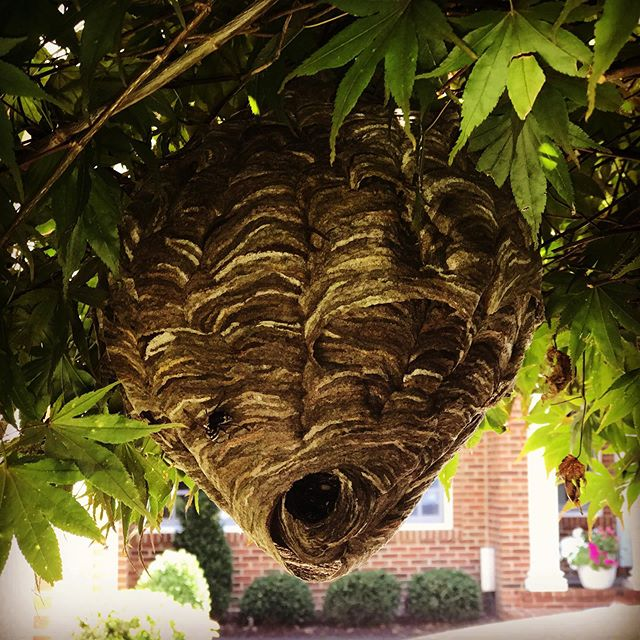 A work of art.created by wasps  #workyoulove #career #careerchange #careeroutsidethebox