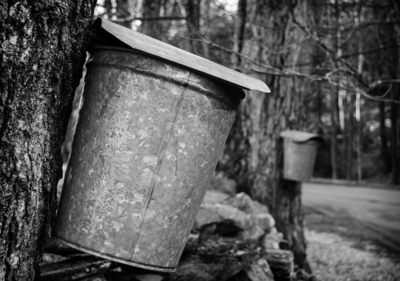 Sap buckets hanging on maple trees.  Here I used the element of repetition to add visual interest to the photo.