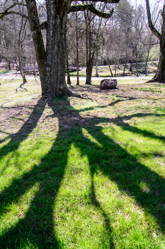 Photo shot with a Tokina 11-16mm ultrawide lens. The larger angle of view allowed for showing the tree while making the shadow itself the subject.
