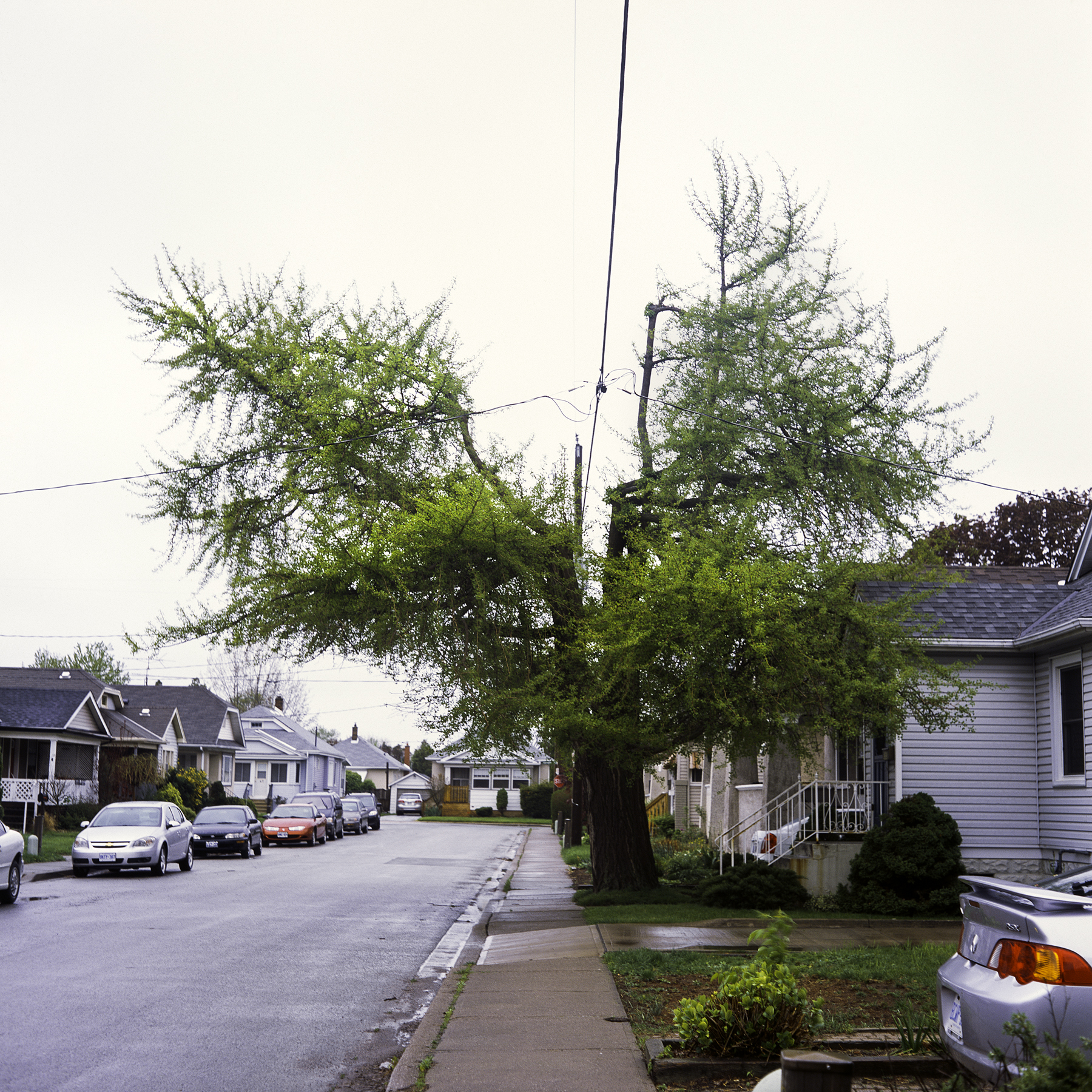 Atwood St., 2011
