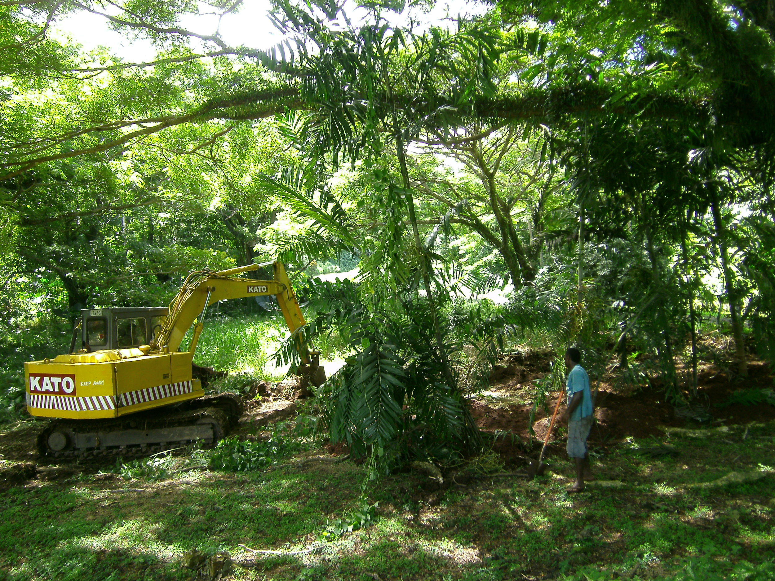 The excavator hard at work preparing the site for the moved palms.