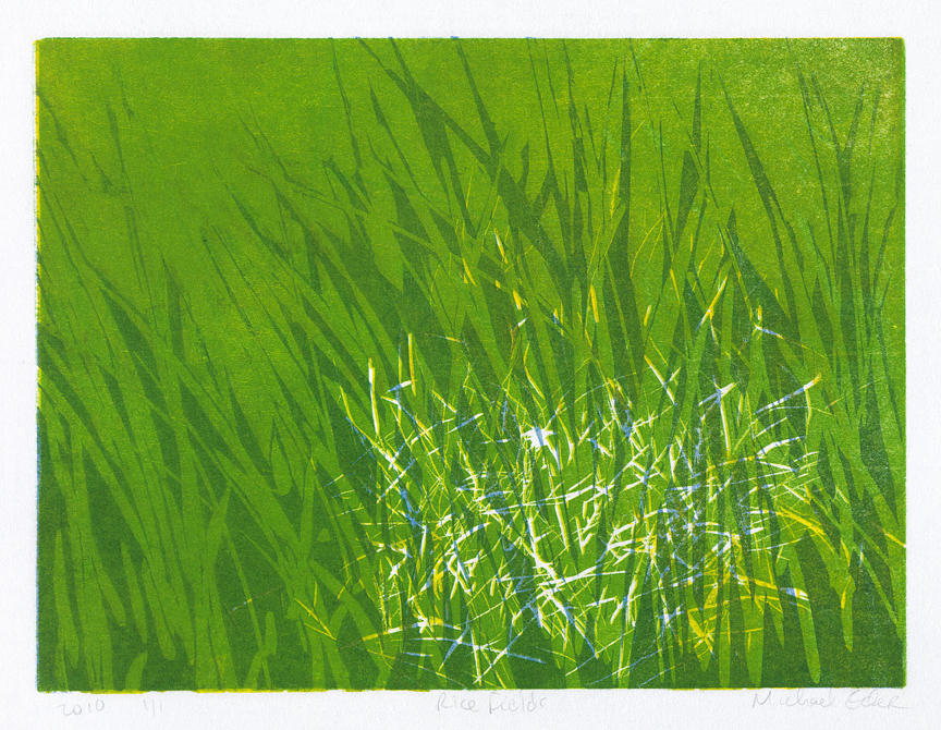 Rice Fields IV