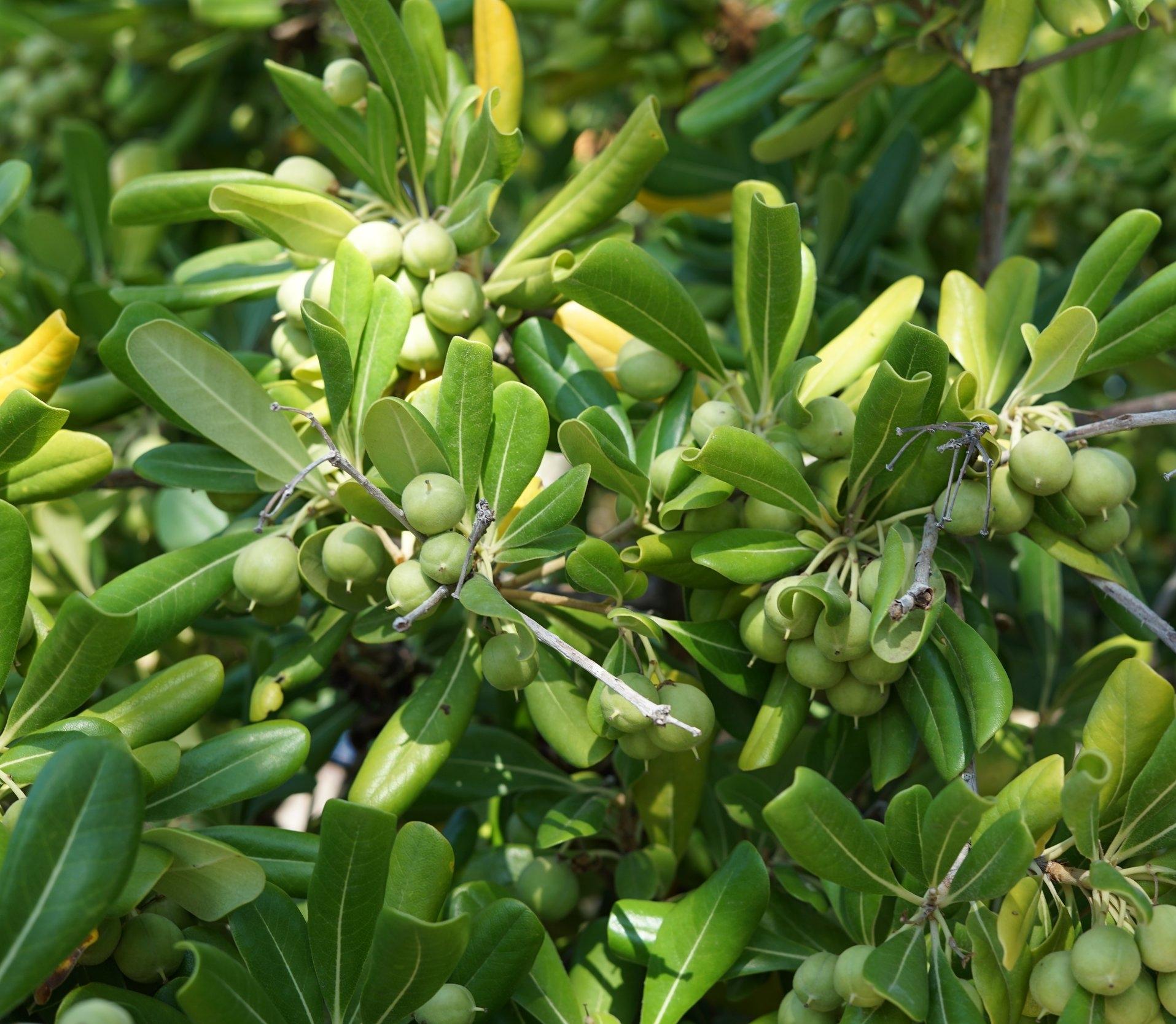 olives-2750304.jpg