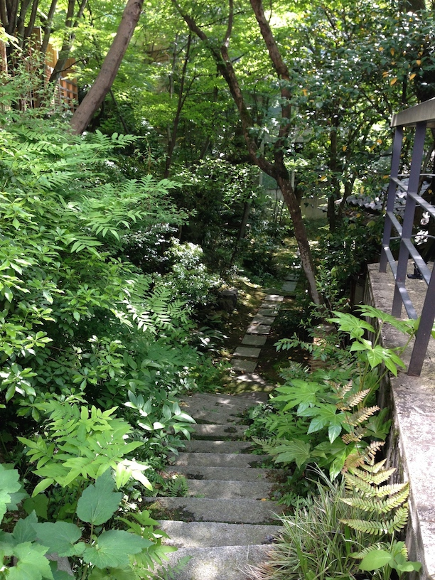 The path to the forest garden