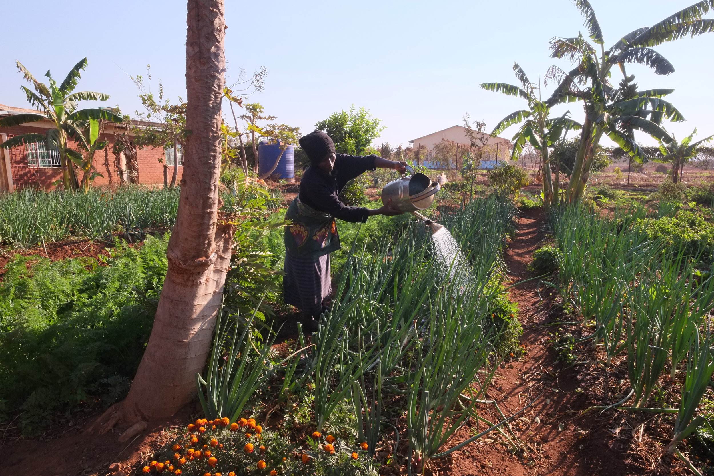 Jean tends the camp's veggie garden. She sells produce at local markets.
