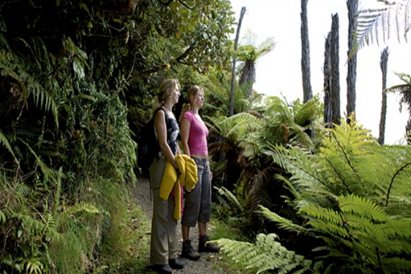 Hiking the trails of Ulva Island, New Zealand.