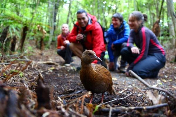 Close encounters on Ulva Island, New Zealand.