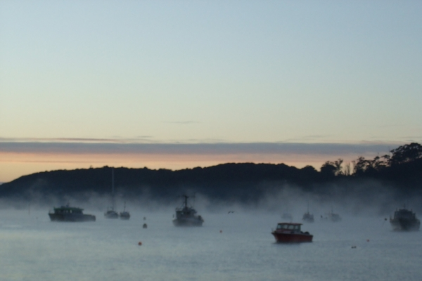 Copy of Misty morning on Stewart Island, New Zealand.