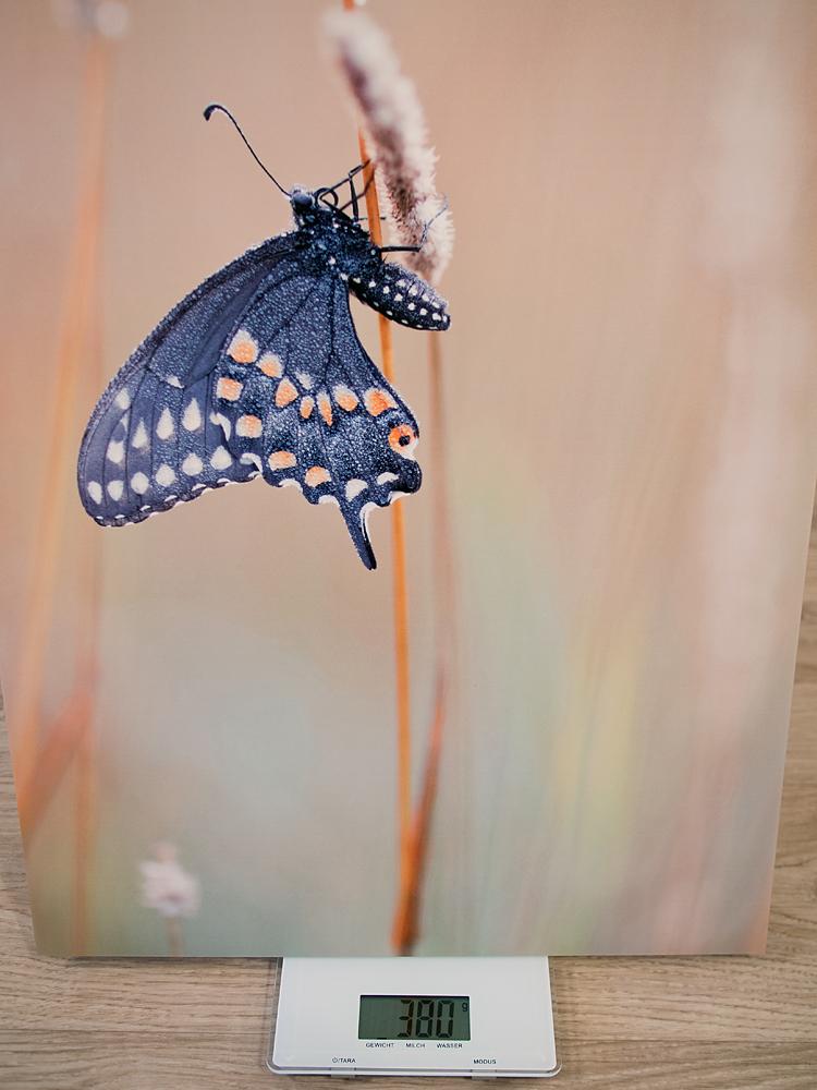 """Das Gewicht des 60x45 Drucks. Nicht wundern, der Schmetterling ist bei diesem Foto """"out of focus"""", das Original ist knackscharf"""