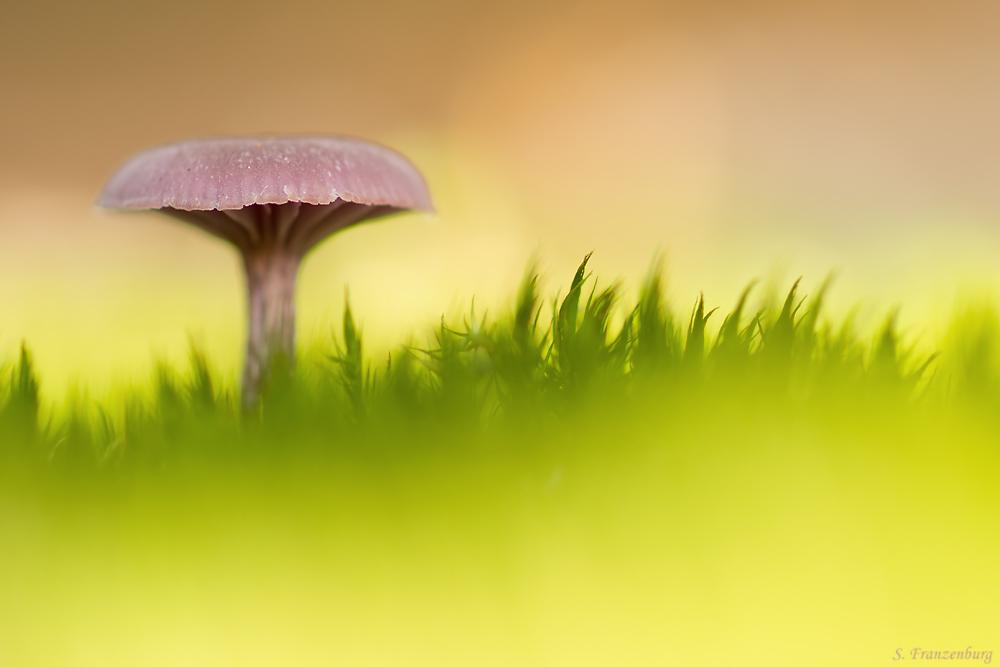unbekannter Pilz auf Moospolster