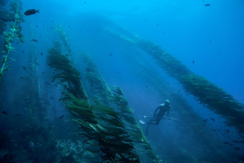 underwater_0003.jpg