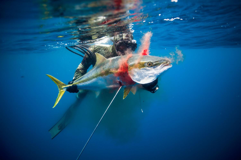 underwater_0006.jpg