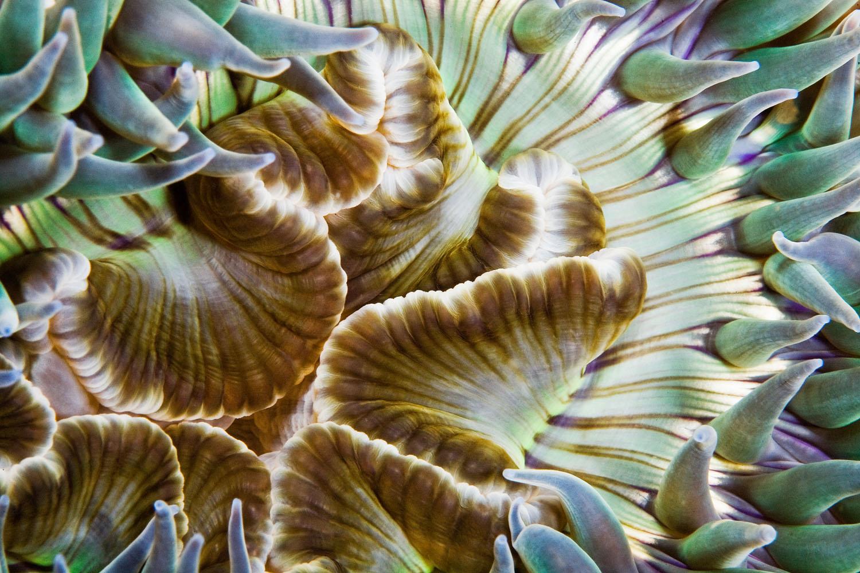 underwater_0008.jpg