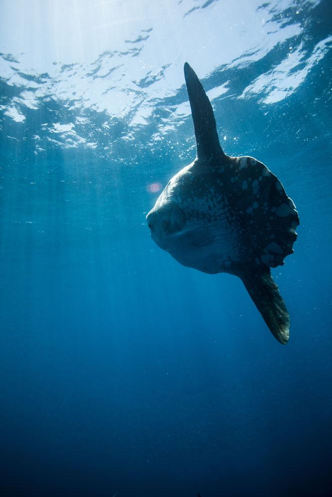underwater_0018.jpg