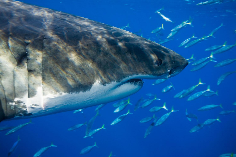 underwater_0020.jpg