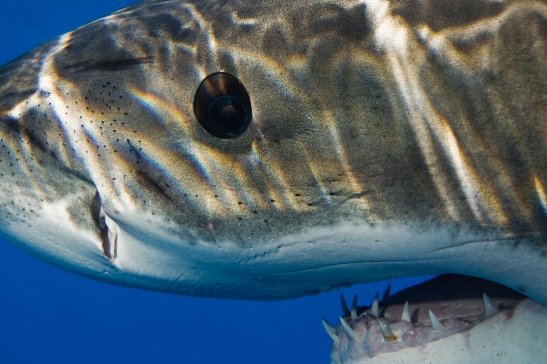 underwater_0019.jpg