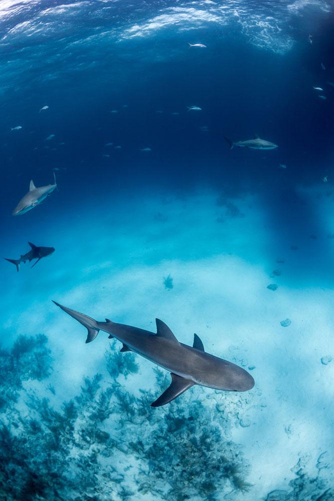 underwater_0022.jpg