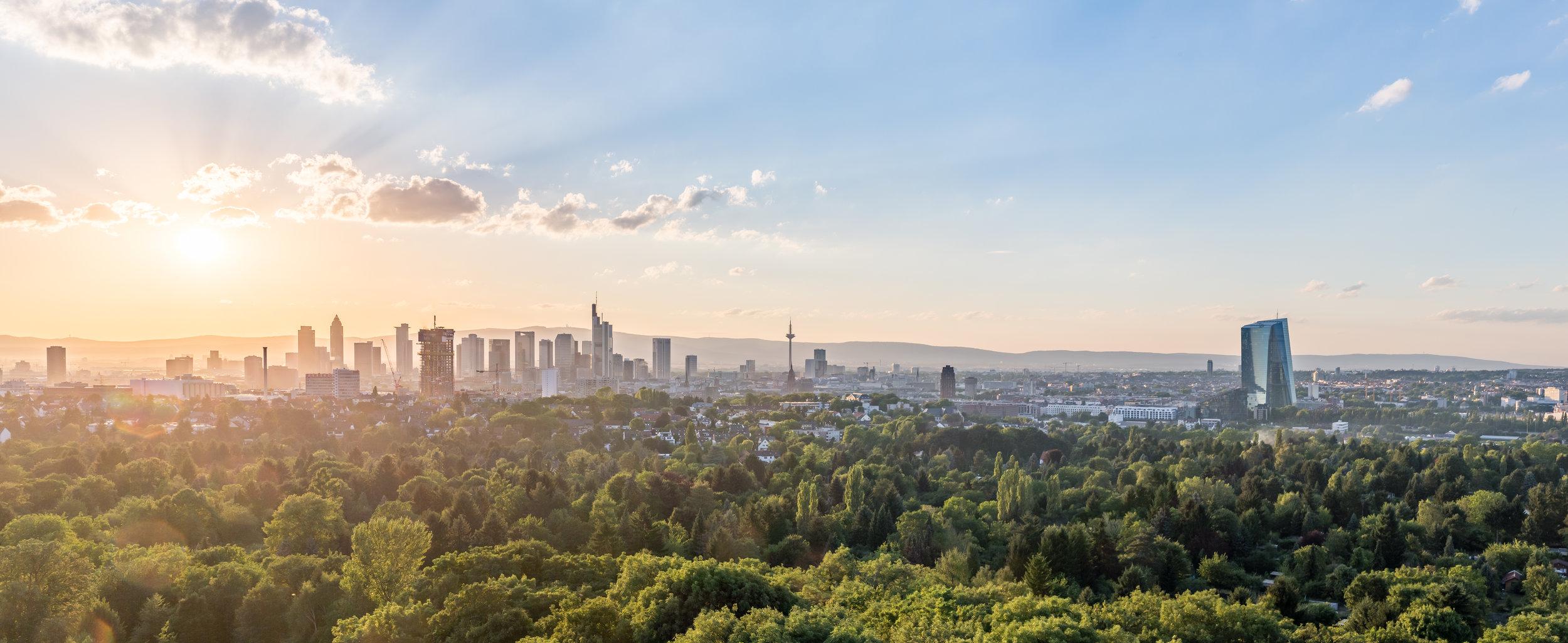 Digital Tigers - Digital Marketing Services for Germany