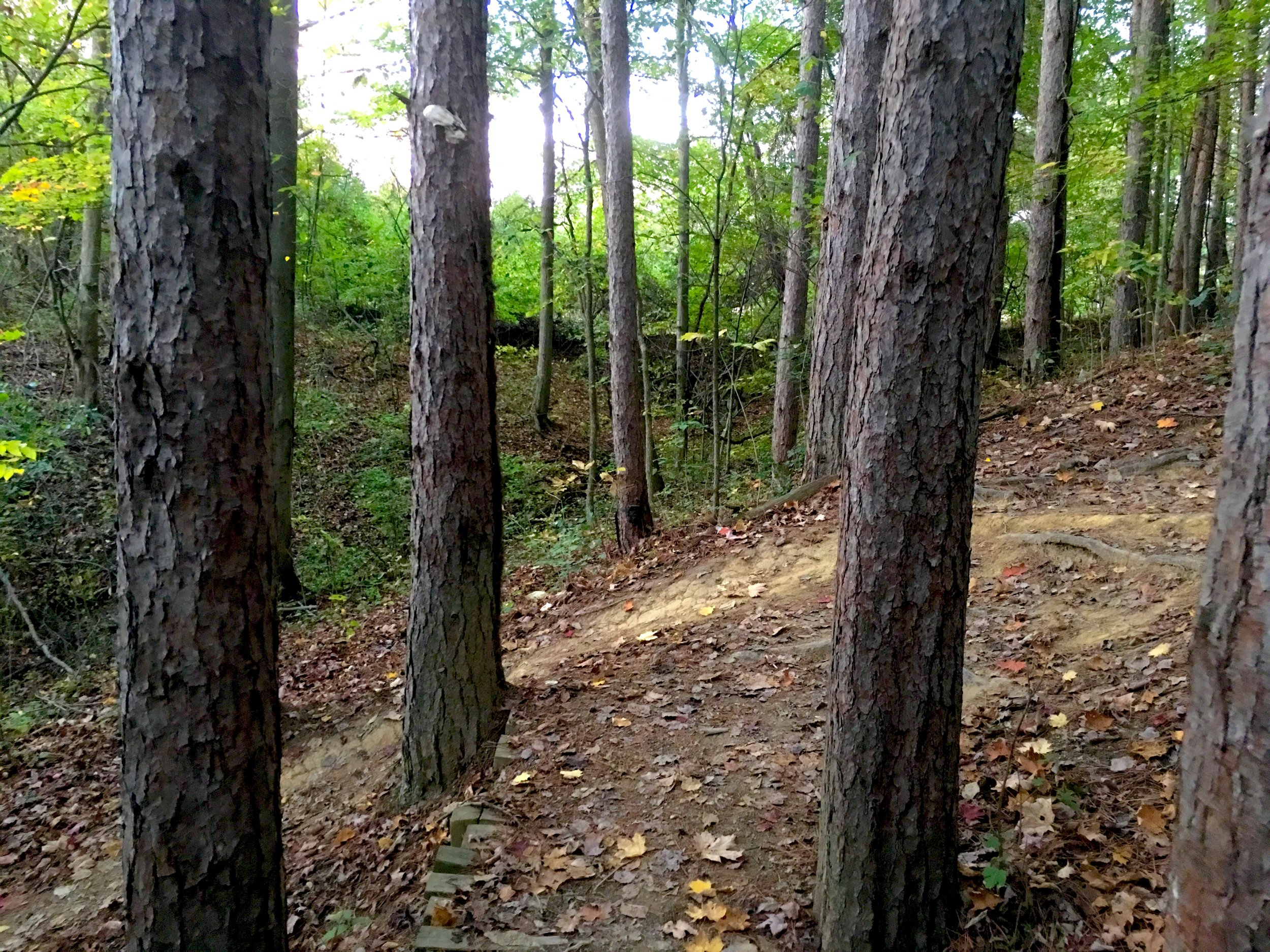 The trail has a personality that changes from season to season. Leaves are a part of that.
