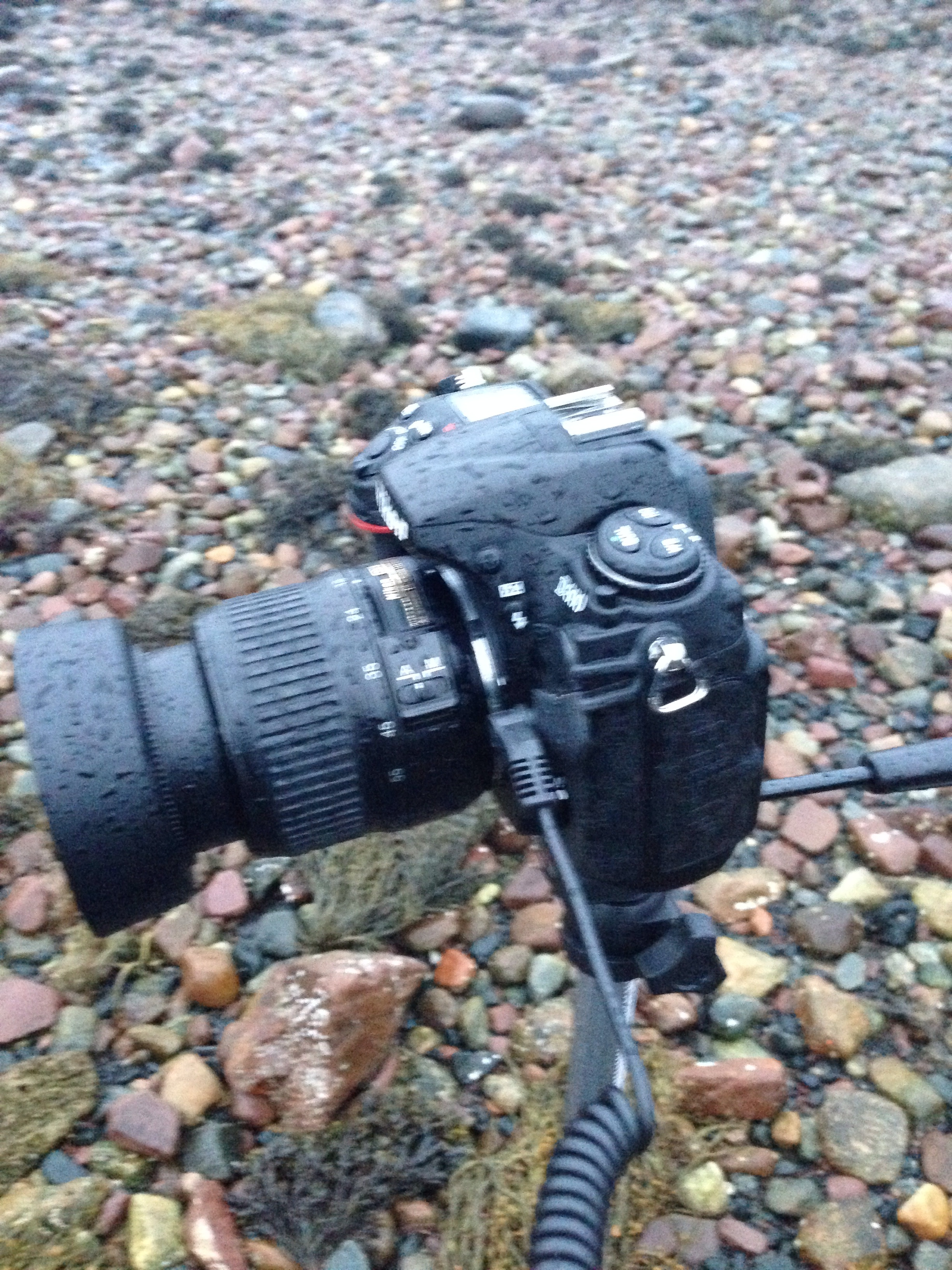 A slightly wet Nikon! (I blame the poor focus on the buffeting wind!)