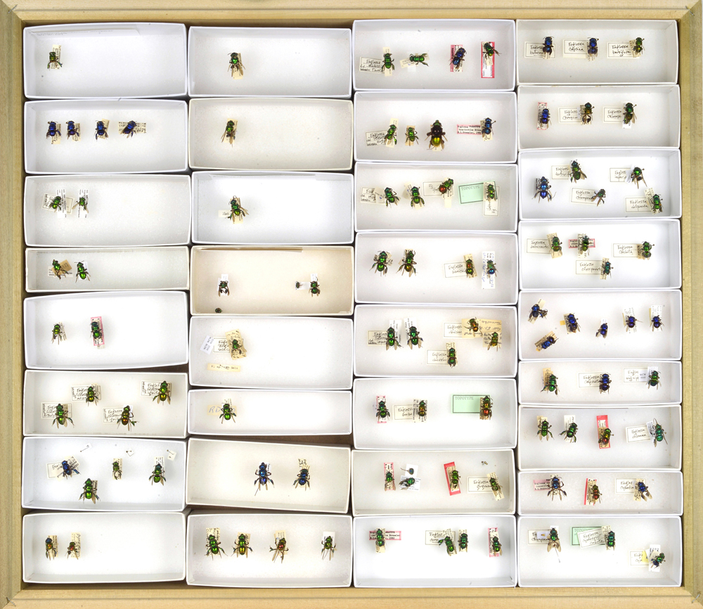 Bee Collection, Illustration Vouchers