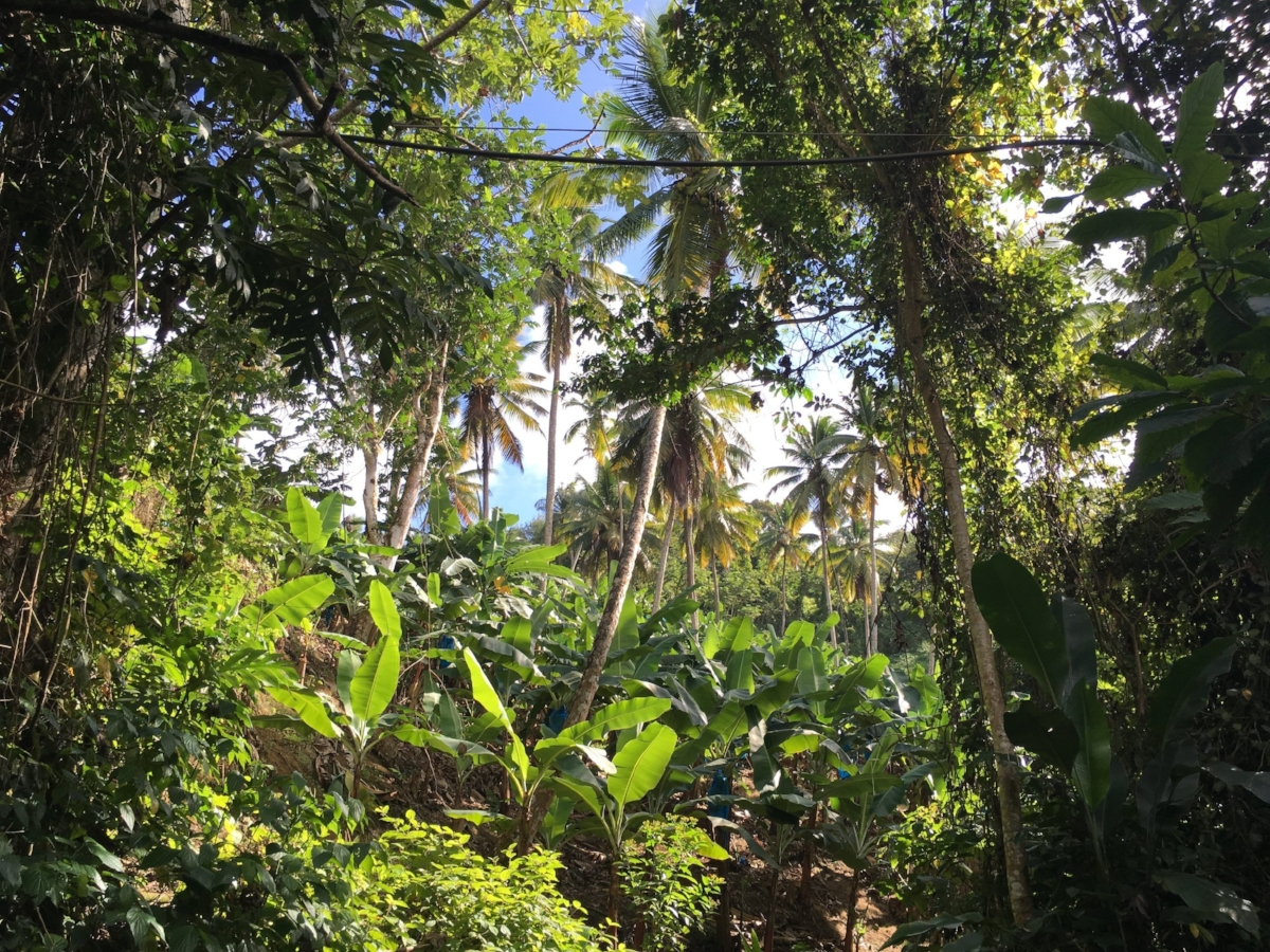 st_lucia_canopy_view.jpg