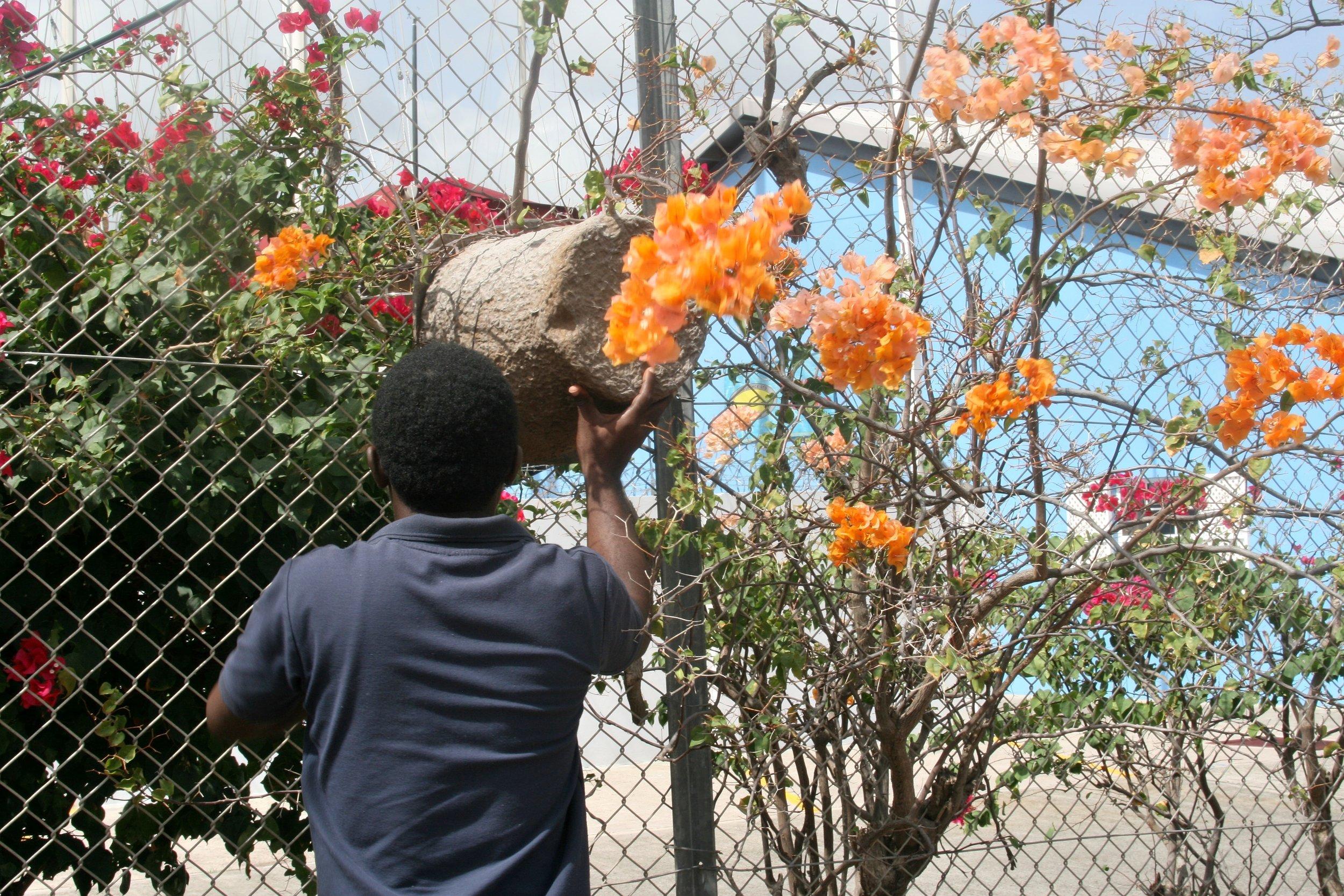 Grenada Dwayne Bait Hive Port.jpg