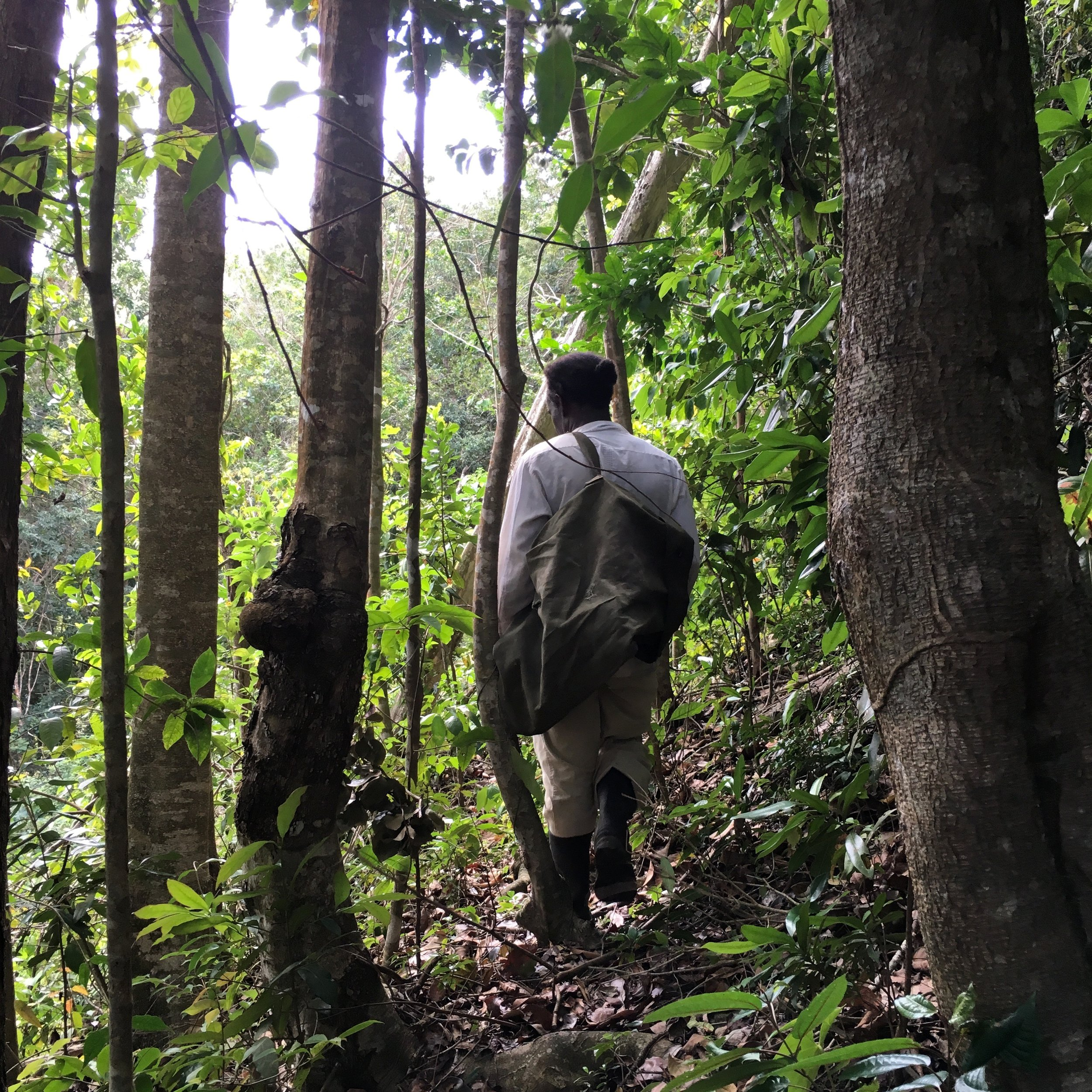 St Lucia Francis Forest Bag.jpg