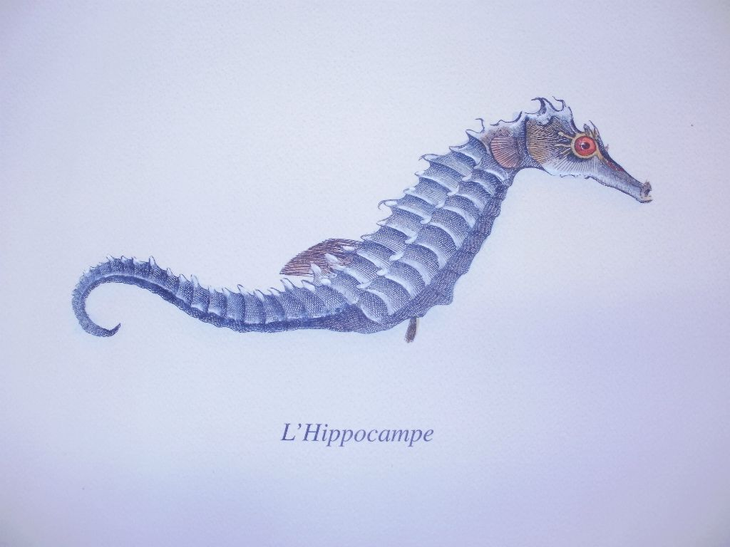 Blue Sea Horse Print