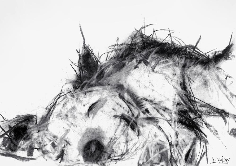 Fluffy Puppy Print