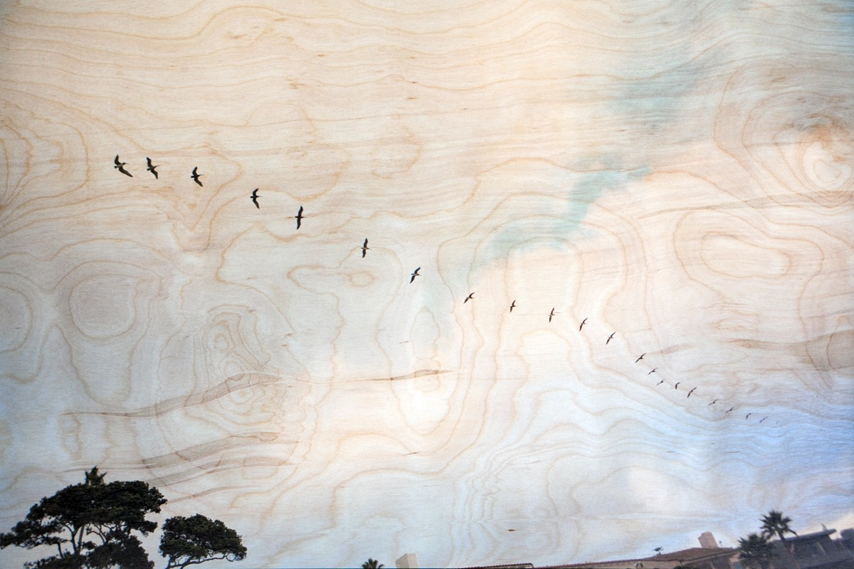 Birds on Birch Wood