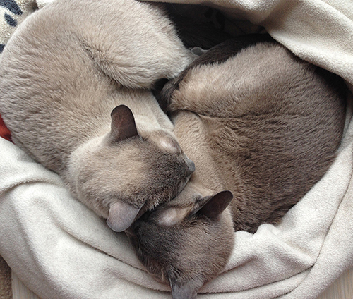 They alway like to cuddle together in a heart shape~