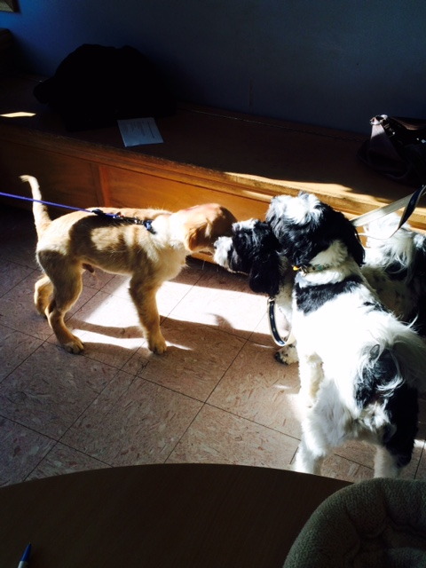 Monty at vet's office.jpg
