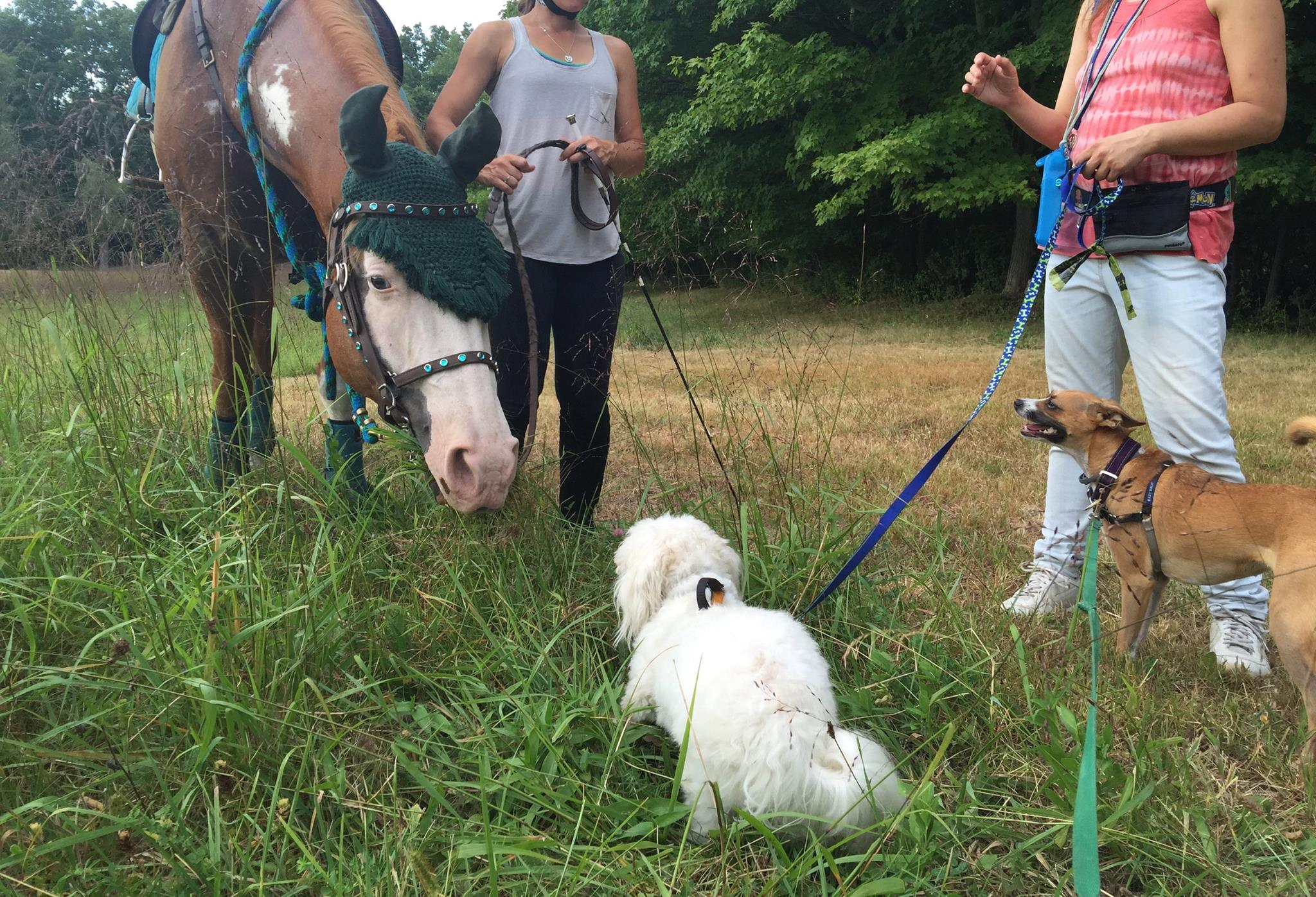 Roger, my trusty steed for 17 years, helps socialize some canine friends, TonTon and Jambo.