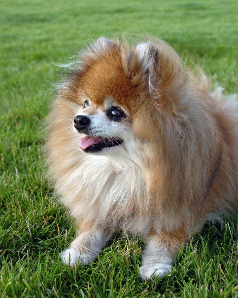 Companion-Dog-Obediance.jpg