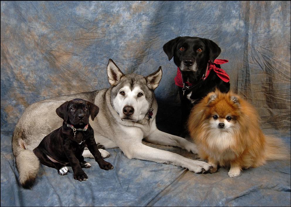 Empowering-Dog-Guardians.jpg